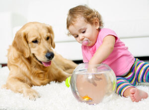 family and pet friendly carpet cleaning